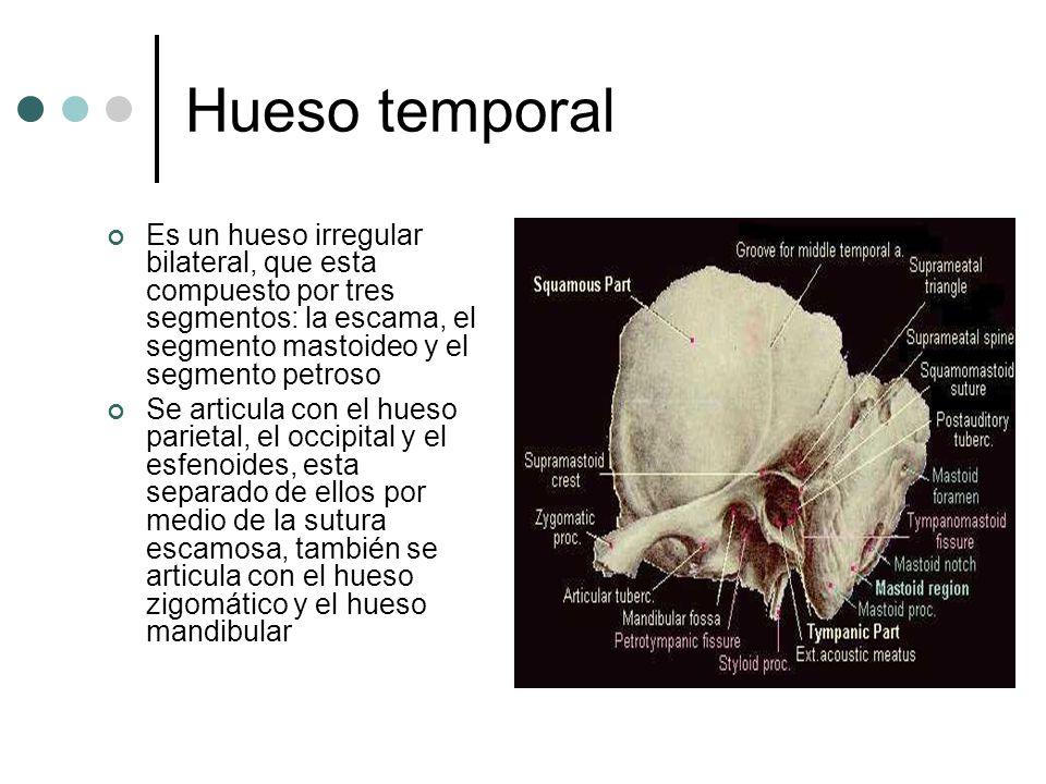 Increíble Ct Anatomía Del Hueso Temporal Regalo - Anatomía de Las ...