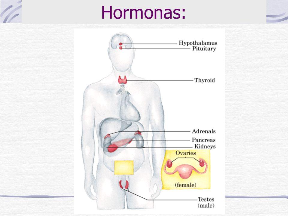 Hormonas: