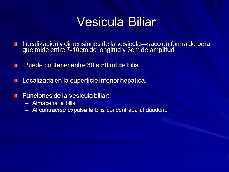 Único Diagrama De La Anatomía De La Vesícula Biliar Imágenes ...