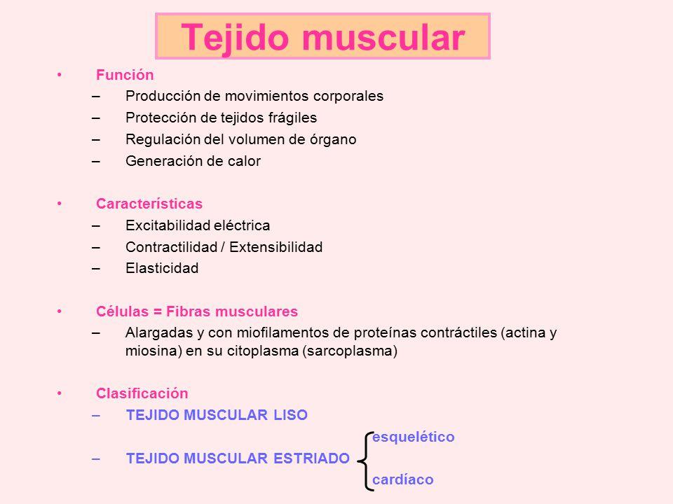 Tejido muscular Función Producción de movimientos corporales - ppt ...