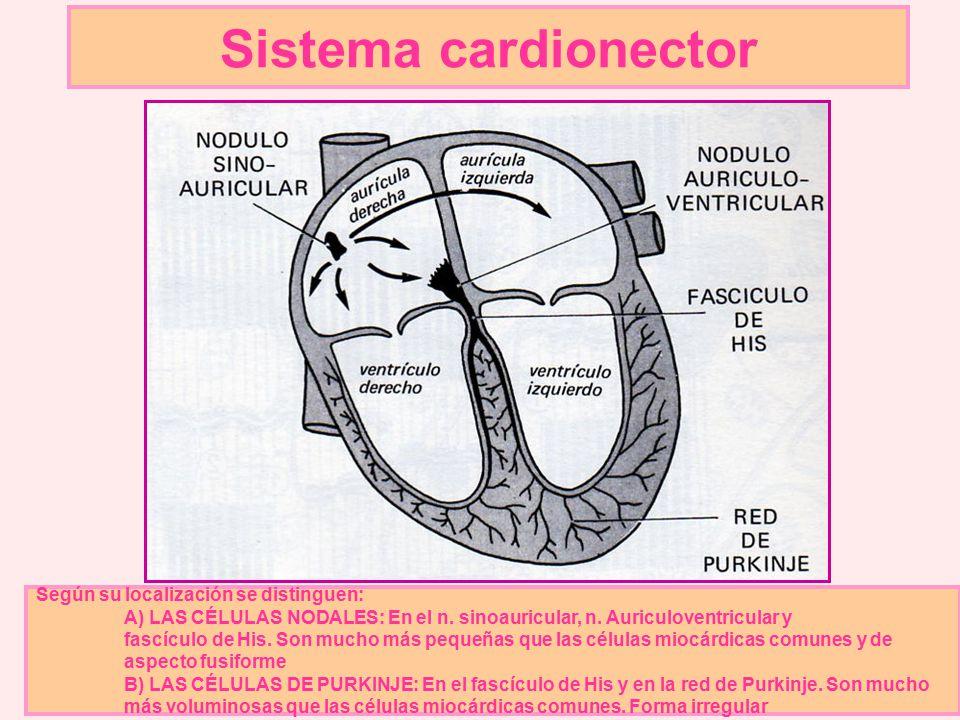 Sistema cardionector