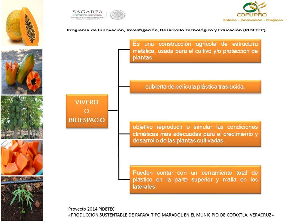 Programa de innovaci n investigaci n desarrollo for Factores para seleccionar el terreno para el vivero