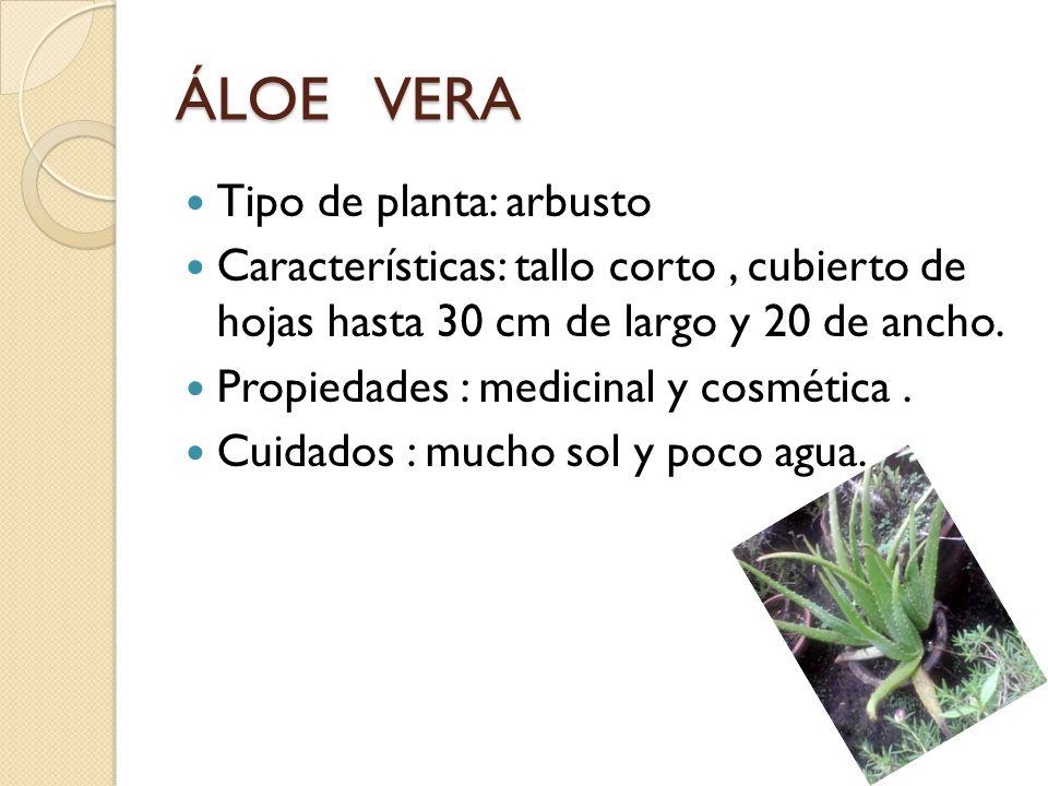La rosa tipo de planta arbusto espinoso ppt video - Tipos de plantas y sus cuidados ...