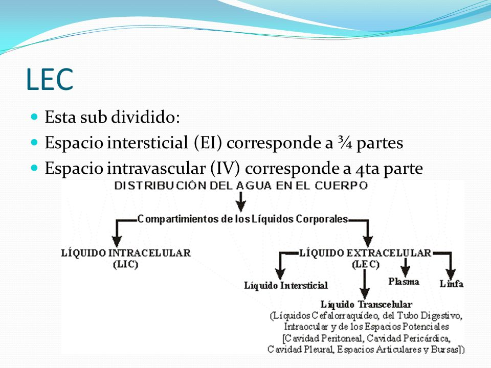 LEC Esta sub dividido: Espacio intersticial (EI) corresponde a ¾ partes.