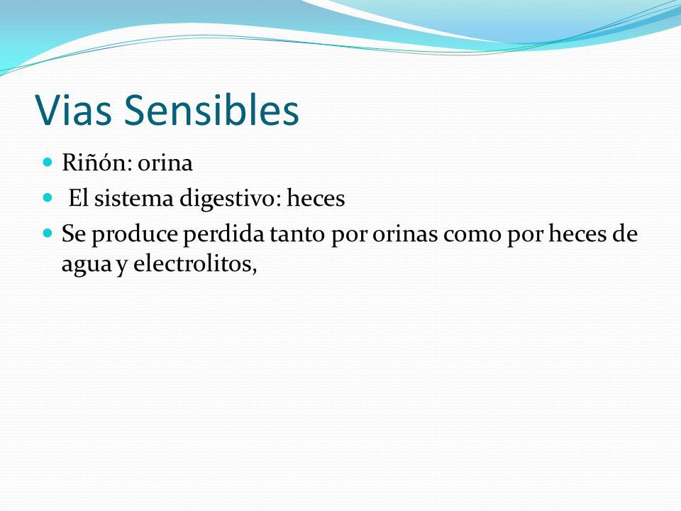Vias Sensibles Riñón: orina El sistema digestivo: heces