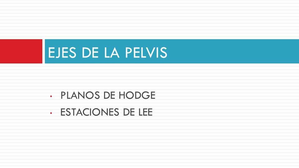 EJES DE LA PELVIS PLANOS DE HODGE ESTACIONES DE LEE