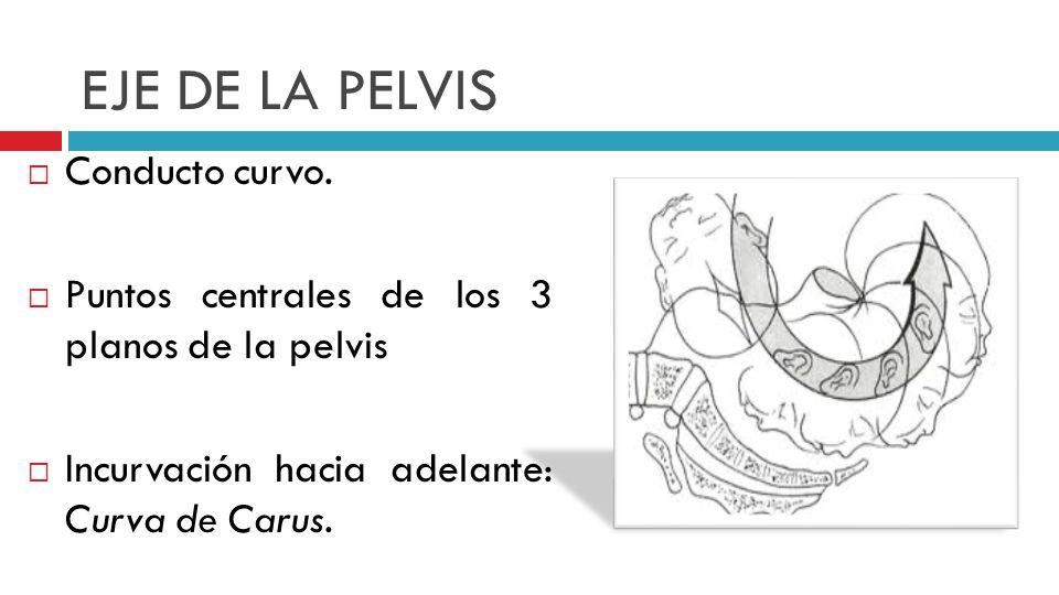 EJE DE LA PELVIS Conducto curvo.
