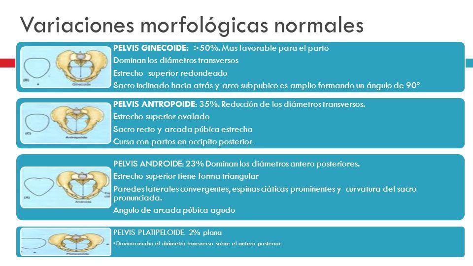 Variaciones morfológicas normales