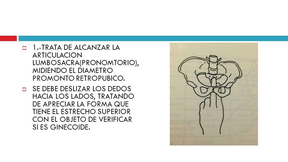 1.-TRATA DE ALCANZAR LA ARTICULACION LUMBOSACRA(PRONOMTORIO), MIDIENDO EL DIAMETRO PROMONTO RETROPUBICO.