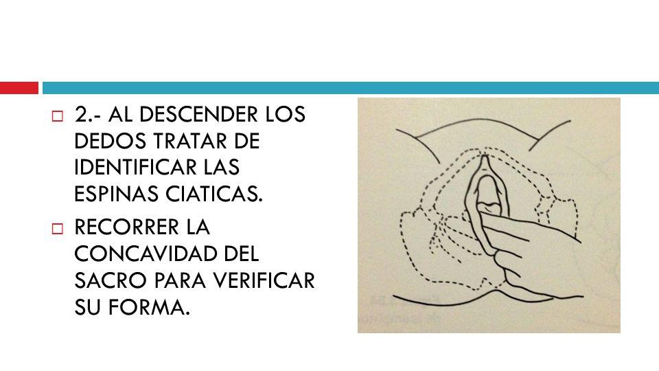 2.- AL DESCENDER LOS DEDOS TRATAR DE IDENTIFICAR LAS ESPINAS CIATICAS.