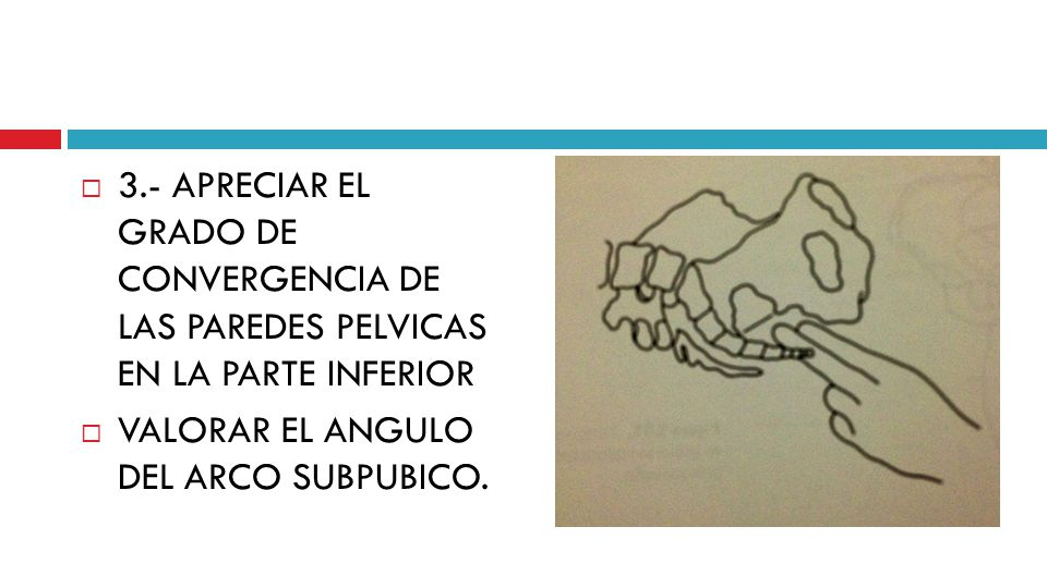 3.- APRECIAR EL GRADO DE CONVERGENCIA DE LAS PAREDES PELVICAS EN LA PARTE INFERIOR