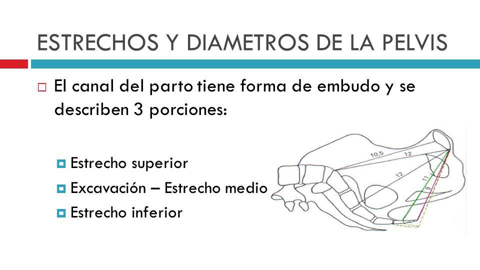 ESTRECHOS Y DIAMETROS DE LA PELVIS