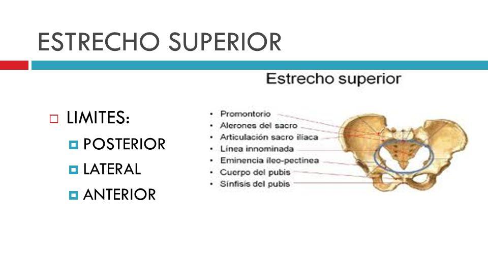 ESTRECHO SUPERIOR LIMITES: POSTERIOR LATERAL ANTERIOR