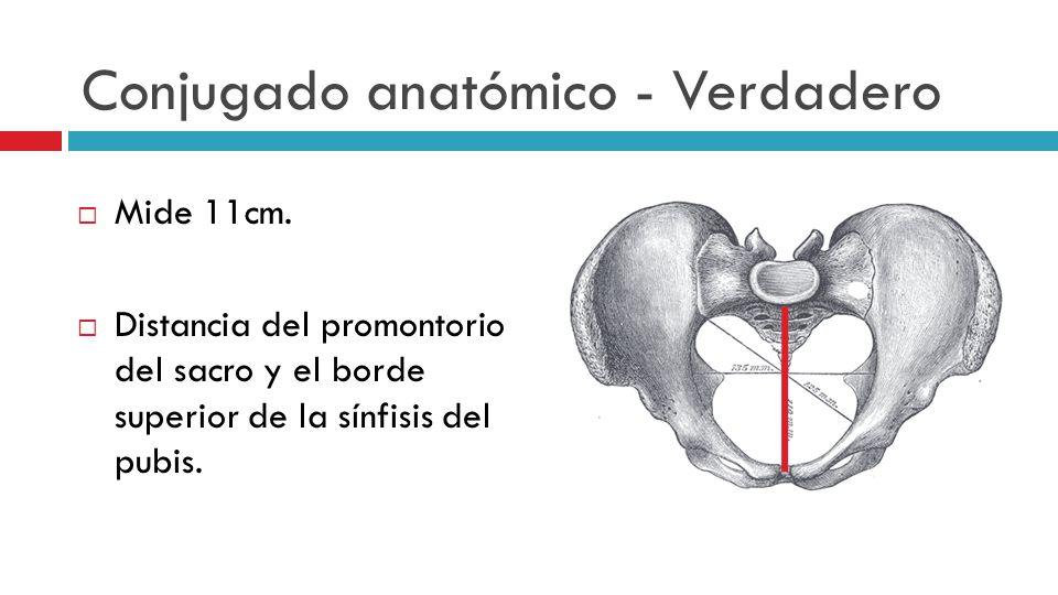 Conjugado anatómico - Verdadero
