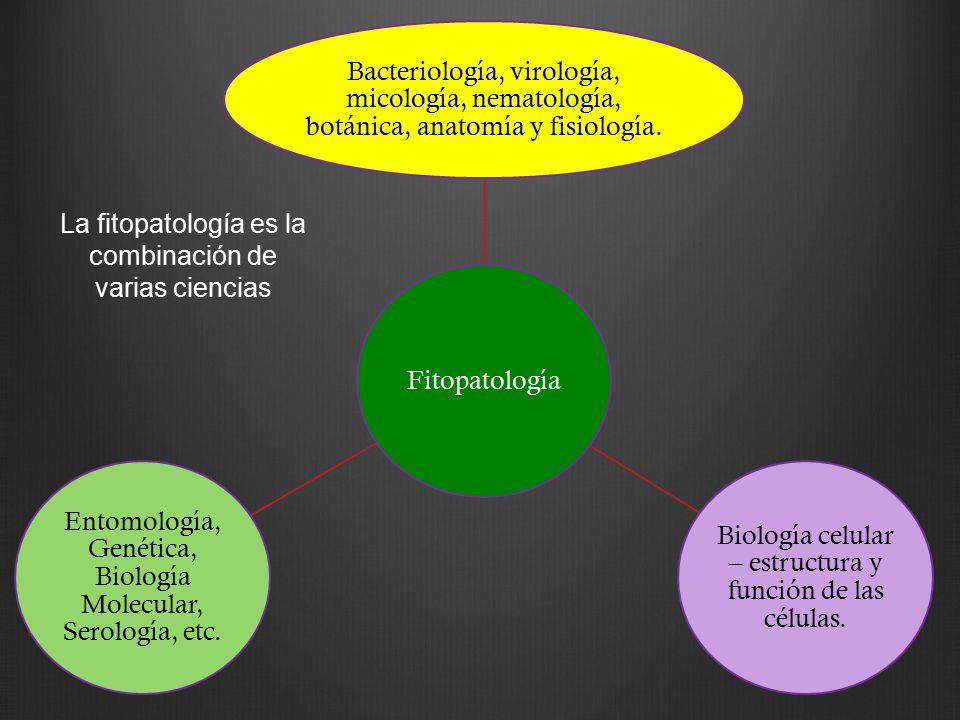 Magnífico Maestría En Ciencias De La Anatomía Bosquejo - Anatomía de ...