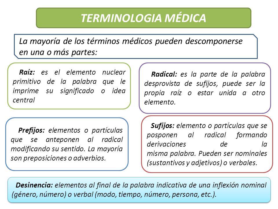 Único Terminología Médica Y Anatomía Molde - Anatomía de Las ...