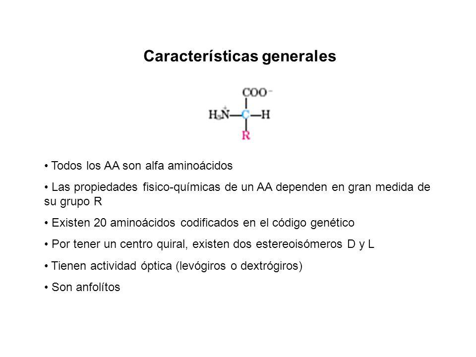 Propiedades fisicoqu micas de los amino cidos primera for Marmol caracteristicas y usos
