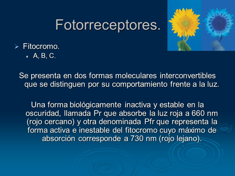 Fotorreceptores. Fitocromo.