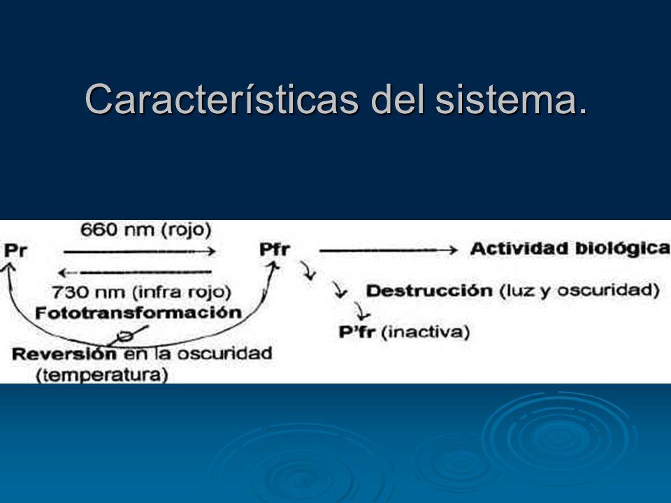Características del sistema.