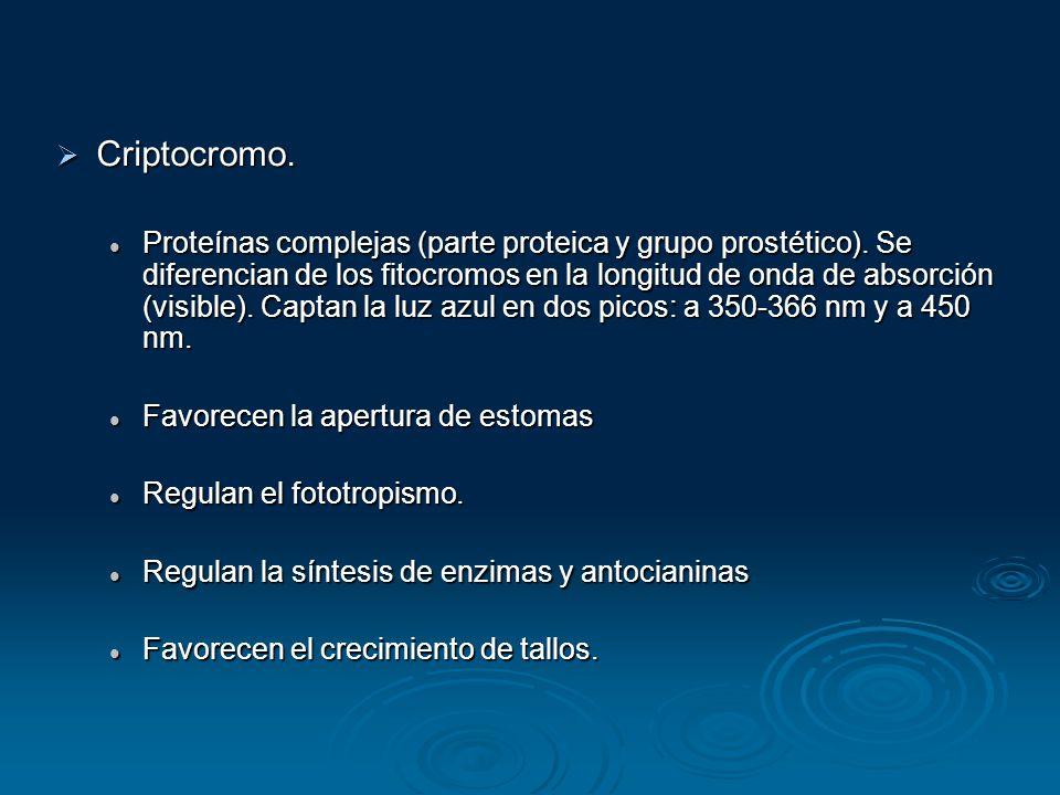 Criptocromo.