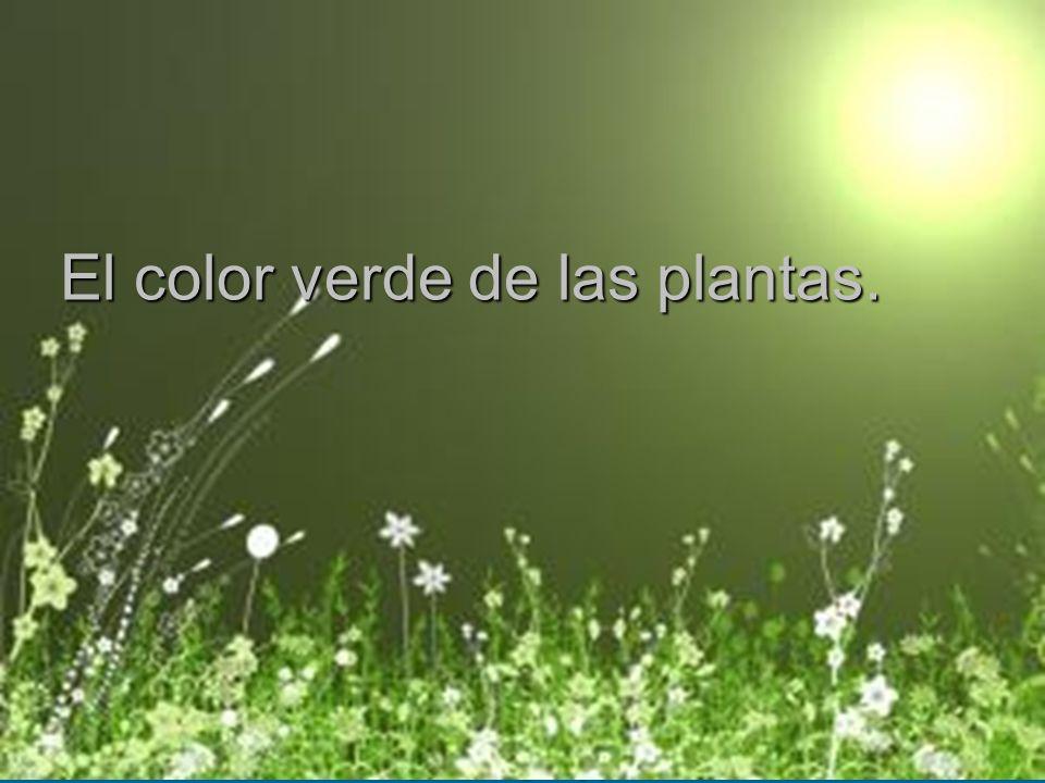 El color verde de las plantas.