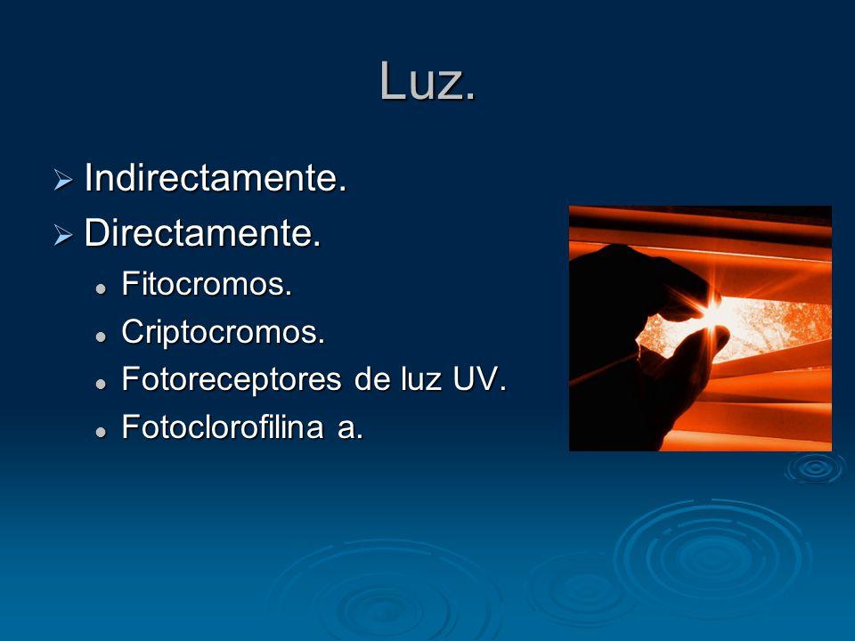 Luz. Indirectamente. Directamente. Fitocromos. Criptocromos.