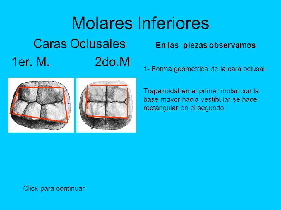 Encantador Maxilar Primera Anatomía Oclusal Molar Galería - Imágenes ...