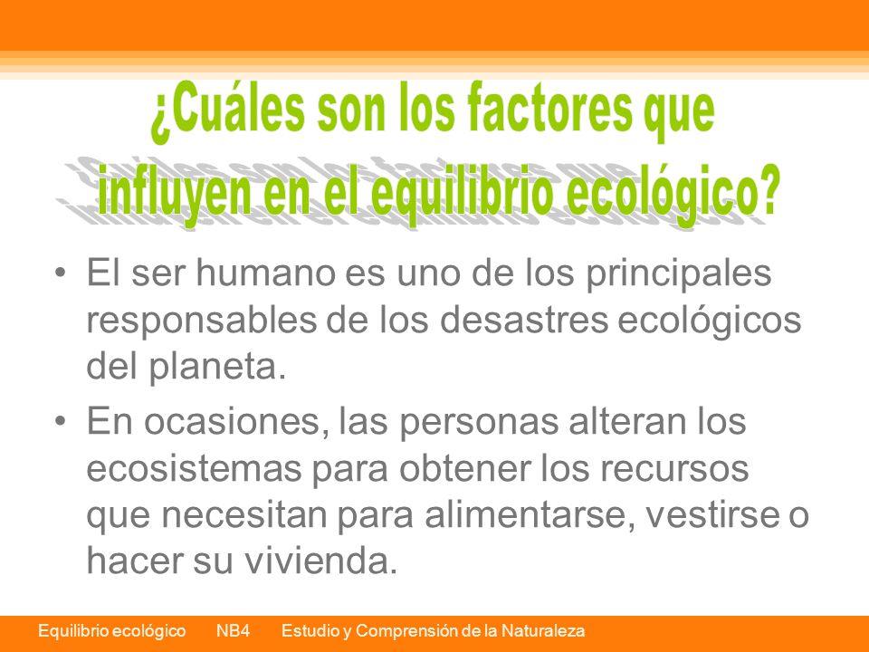 ¿Cuáles son los factores que influyen en el equilibrio ecológico