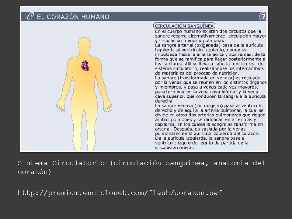 Hermosa Flash De La Anatomía Humana Motivo - Imágenes de Anatomía ...