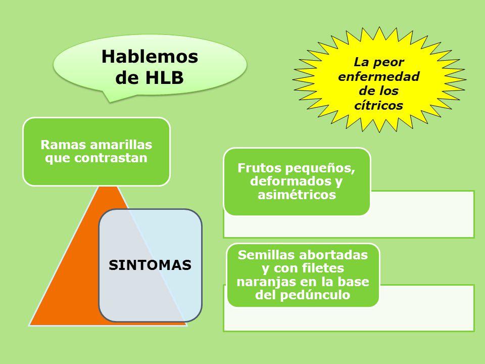 Objetivos no hlb en el pa s la comisi nse form en ppt for Enfermedades citricos fotos