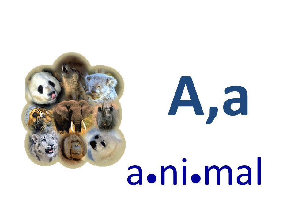 A,a a●ni●mal