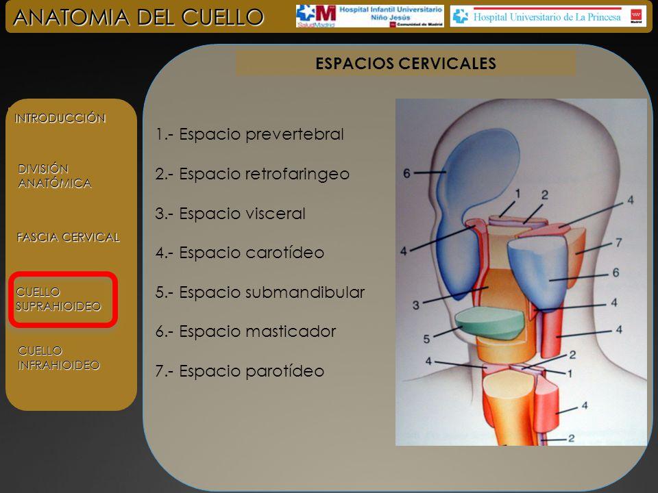 Hermosa Anatomía Del Espacio Cuadrangular Ideas - Anatomía de Las ...