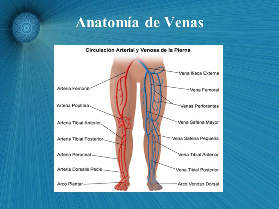 Encantador La Anatomía De La Vena Peronea Regalo - Imágenes de ...
