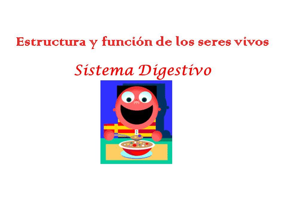 Estructura y funci n de los seres vivos ppt video online descargar - Estructuras libros vivos ...