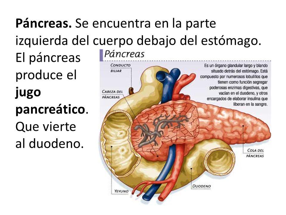 Famoso Donde Se Encuentra El Páncreas En El Cuerpo Cresta - Anatomía ...