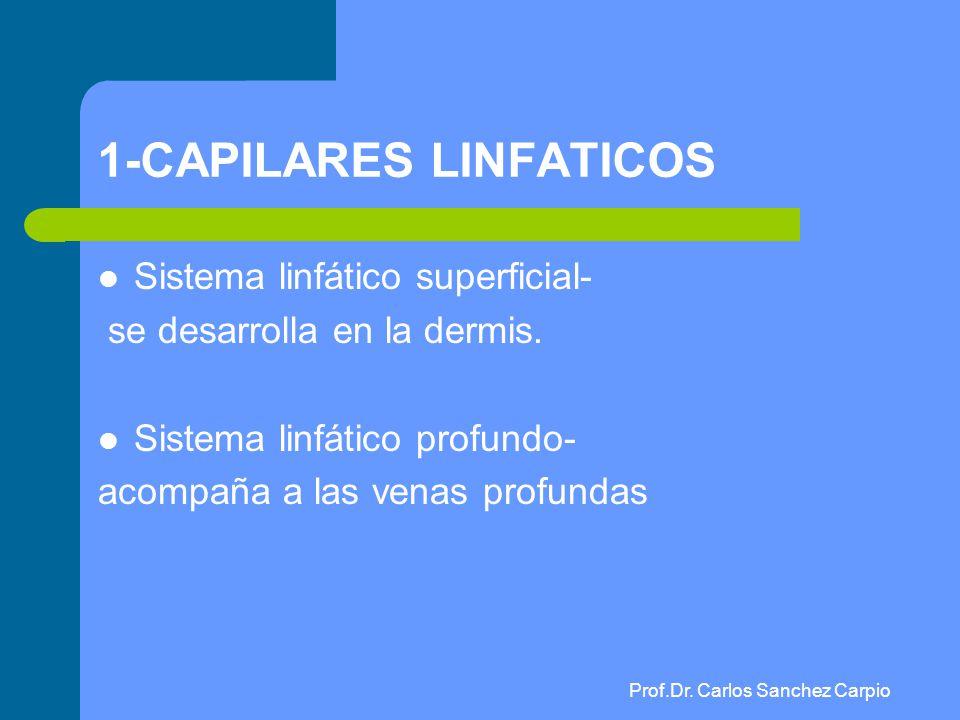 Prof. Dr. Carlos Sánchez Carpio - ppt video online descargar