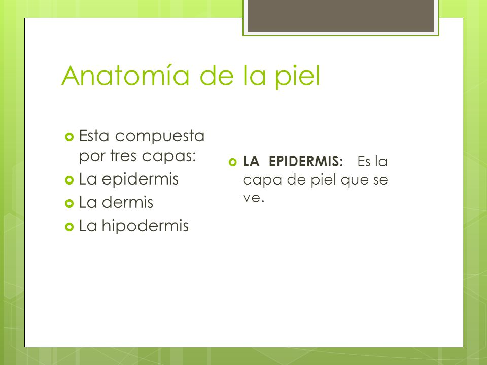 Anatomía de la piel Esta compuesta por tres capas: La epidermis