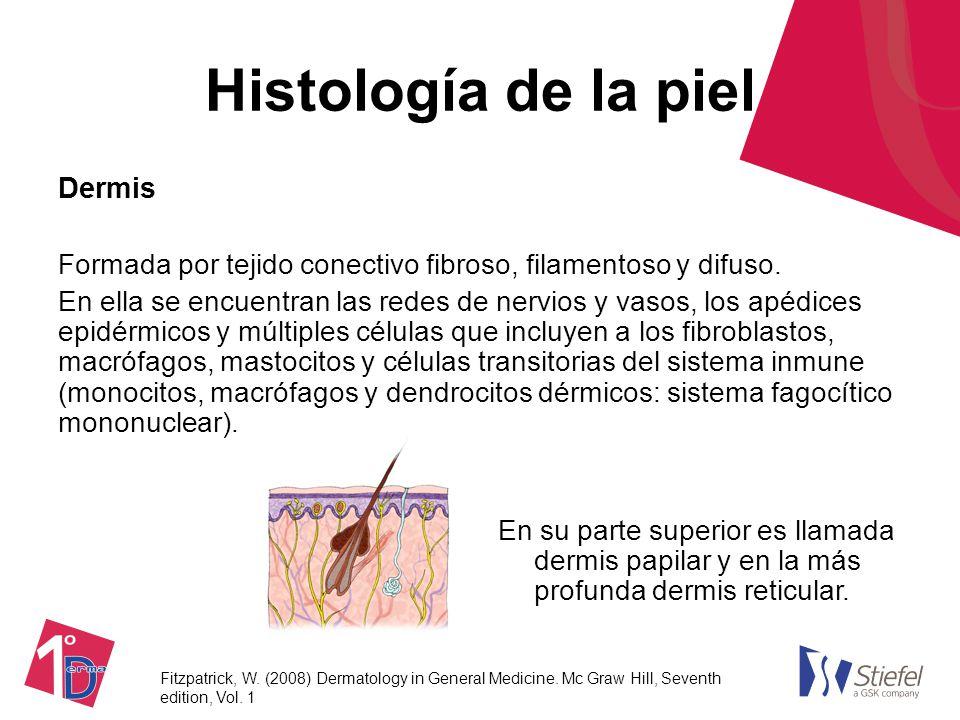 Famoso Tejido Diapositivas Anatomía Motivo - Imágenes de Anatomía ...