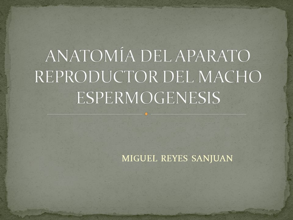 ANATOMÍA DEL APARATO REPRODUCTOR DEL MACHO ESPERMOGENESIS - ppt ...