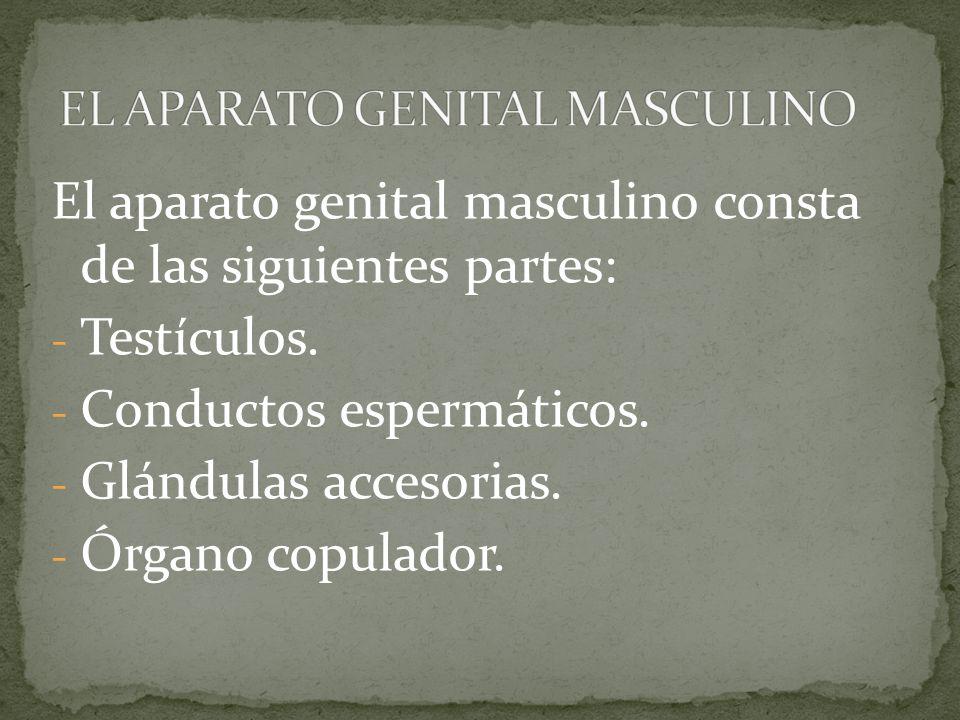 Dorable Anatomía Conejo Macho Cresta - Imágenes de Anatomía Humana ...