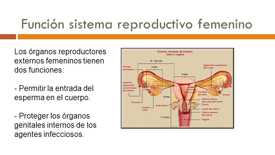 Dra. Amarilys Morales Rivera, PhD - ppt descargar