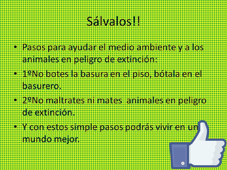 Animales En Peligro De Extinci N Ppt Descargar