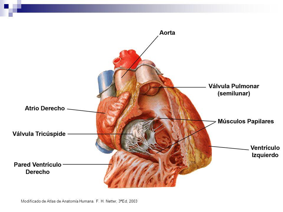 Vistoso órganos Anatomía Humana Vista Posterior Festooning ...