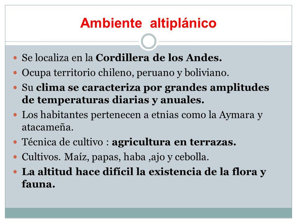 Ambiente altiplánico Se localiza en la Cordillera de los Andes.