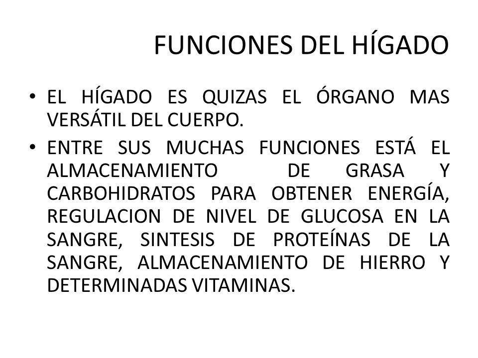 Asombroso Las Funciones Del Hígado A Elaboración - Anatomía de Las ...