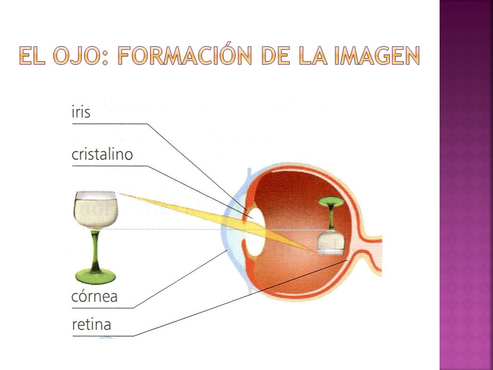 El ojo: formación de la imagen