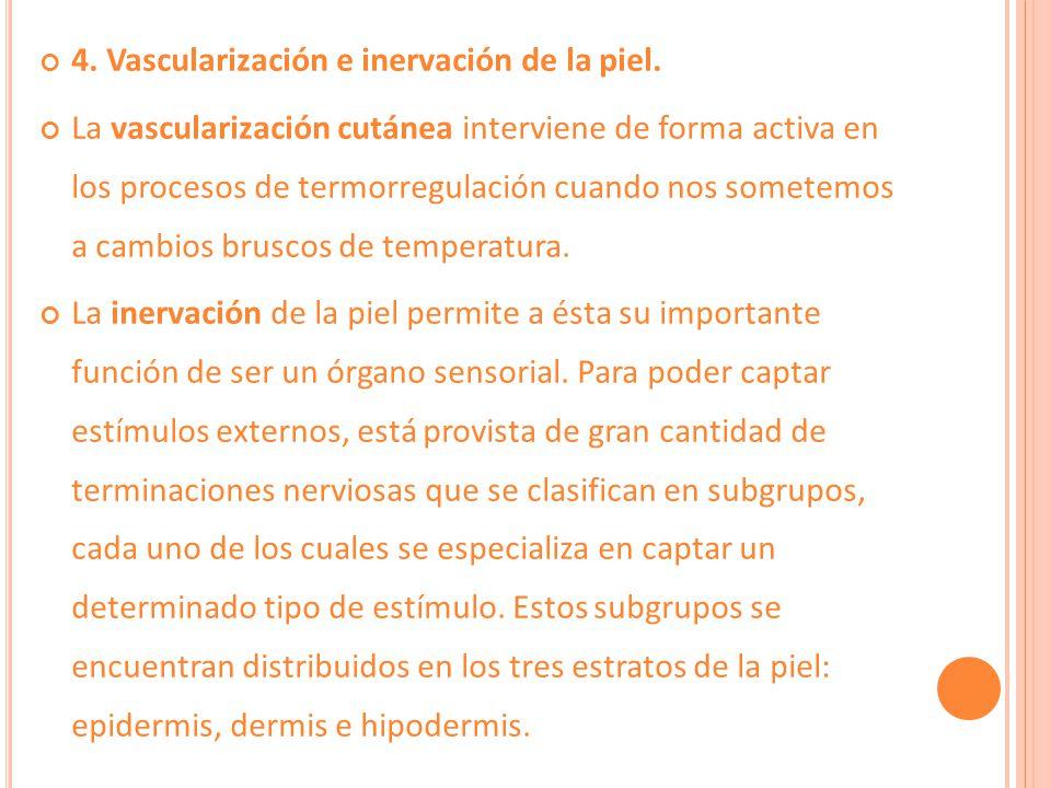 4. Vascularización e inervación de la piel.