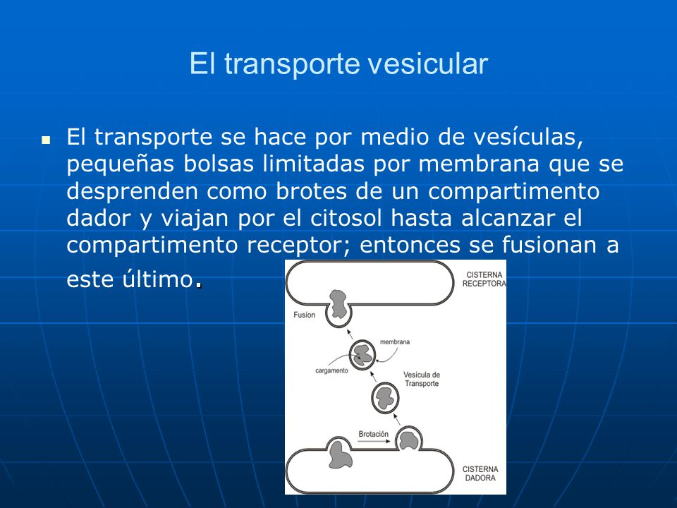 El transporte vesicular