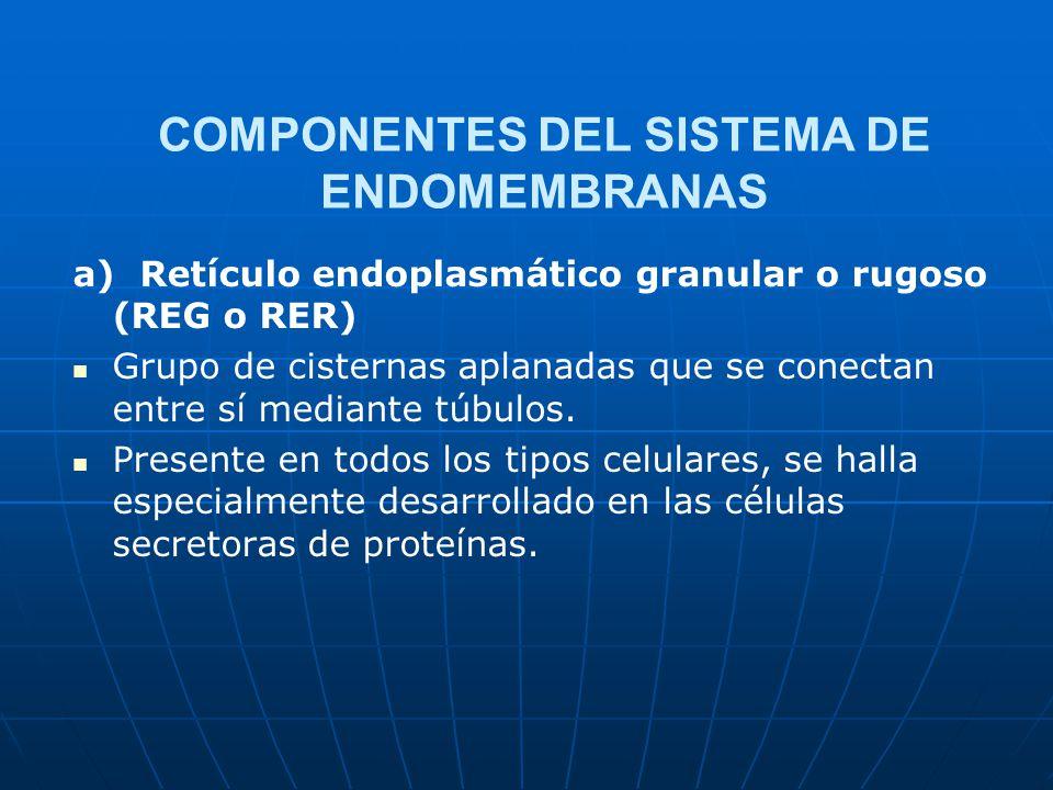COMPONENTES DEL SISTEMA DE ENDOMEMBRANAS