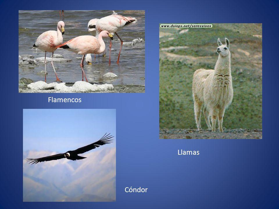 Flamencos Llamas Cóndor
